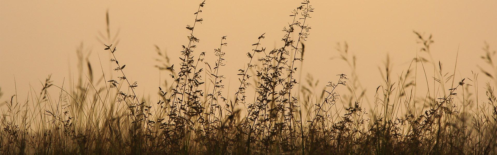 Sträucher, die sich im Wind bewegen mit einem beigen Hintergrund